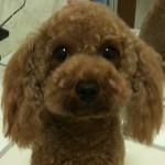 Qoo_profile